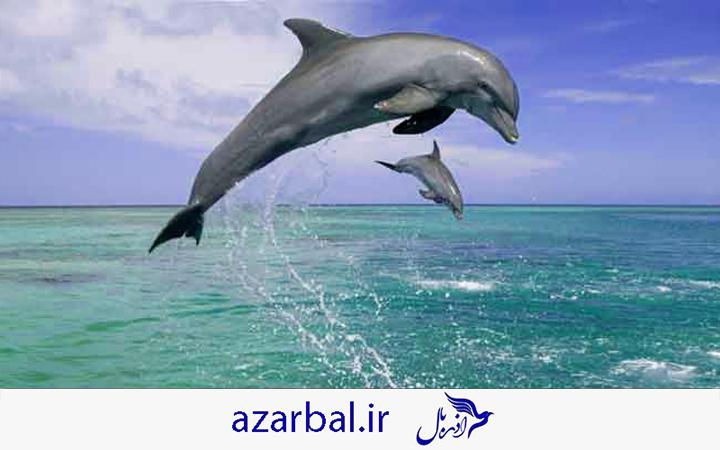 تماشای دلفین در تور قشم